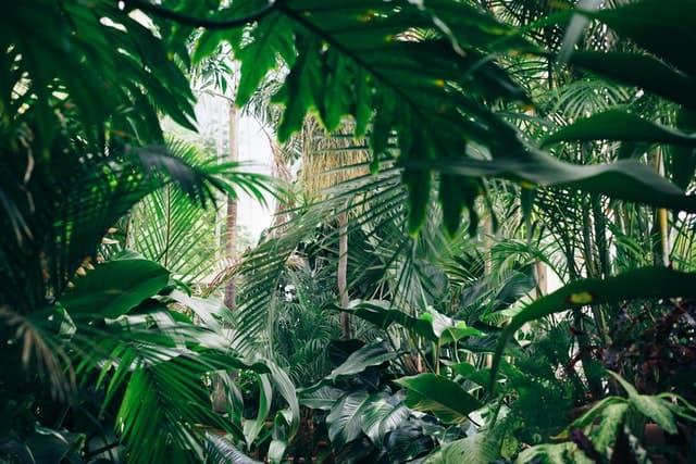 Klanten doen kopen, blik op jungle - Het Schrijfpaleis