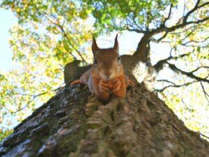 eekhoorn - doen wat je graag doet - Het Schrijfpaleis
