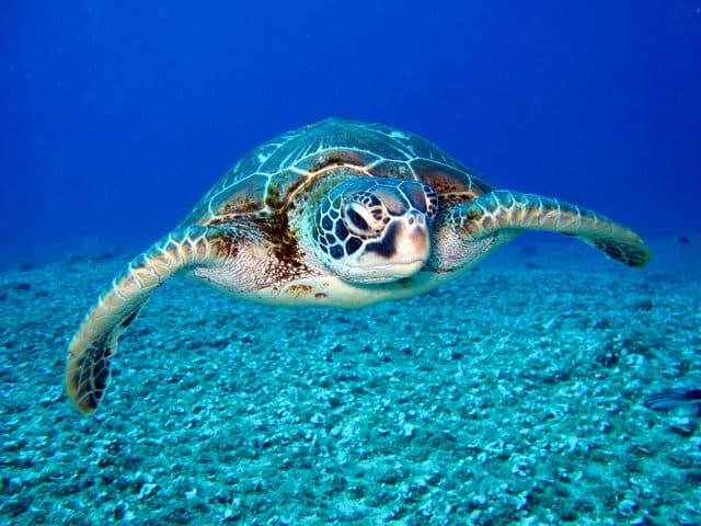 schildpad in zee - wat is een copywriter