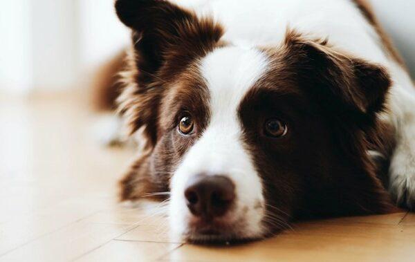 hond - Just Russel en Edgard & Cooper