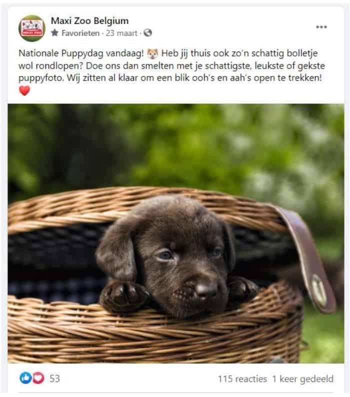 Realisatie Maxi Zoo - Facebook-post Puppydag - Het Schrijfpaleis